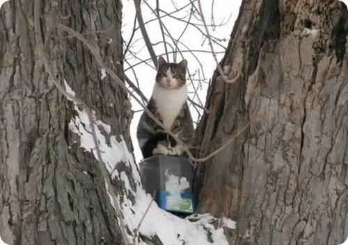 Кот, никогда не покидавший дерево, на котором родился