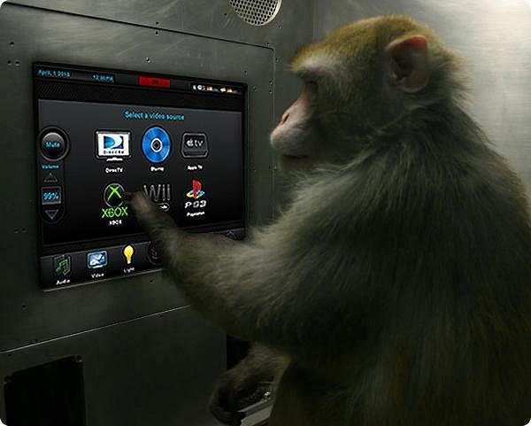 И обезьянам под силу компьютерные игры