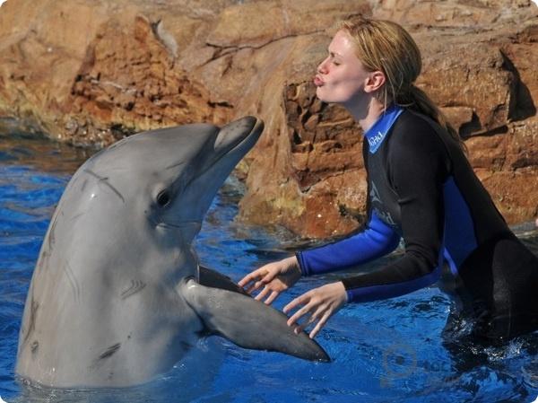 Общий язык с дельфинами…