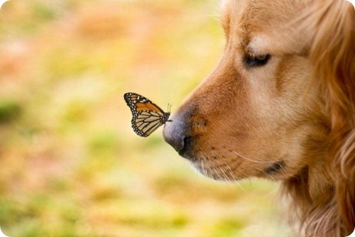 Запахи в мире животных