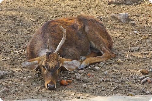 Зоопарк Дели