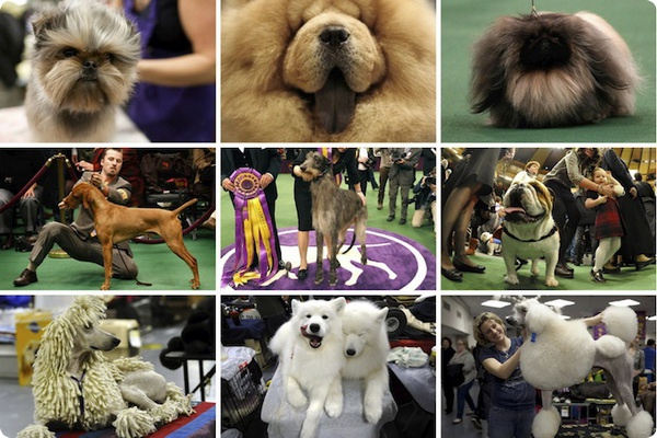 Дог- шоу Westminster Kennel Club Dog Show 2011