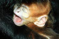 Шумное пополнение в зоопарке Кливленда