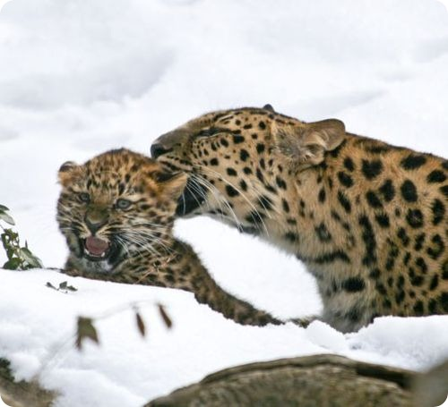 Анастасия знакомится со снегом