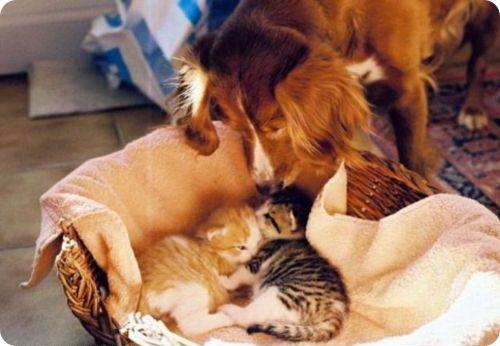Как кошка с собакой – Подборка 15