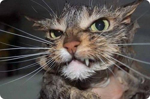 Несколько интересных фактов из жизни кошек