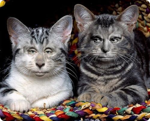 Знаменитые коты России