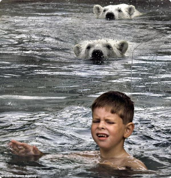 В бассейне с белыми медведями