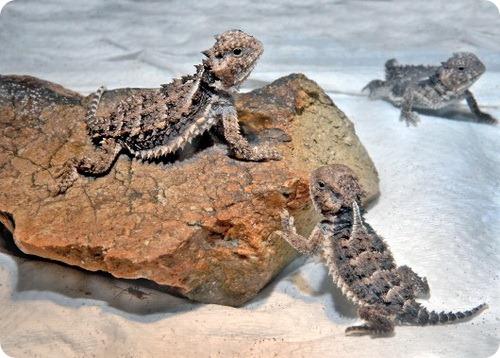 Пополнение в семье рептилий