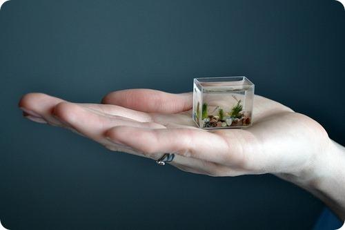 Самый маленький в мире аквариум с рыбками