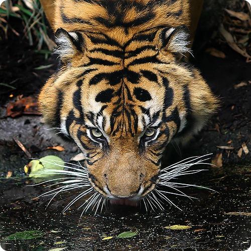Шестое массовое вымирание видов началось