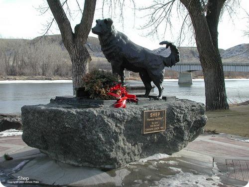 Памятник Колли Шеп