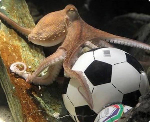 Крымский осьминог-предсказатель Павлик