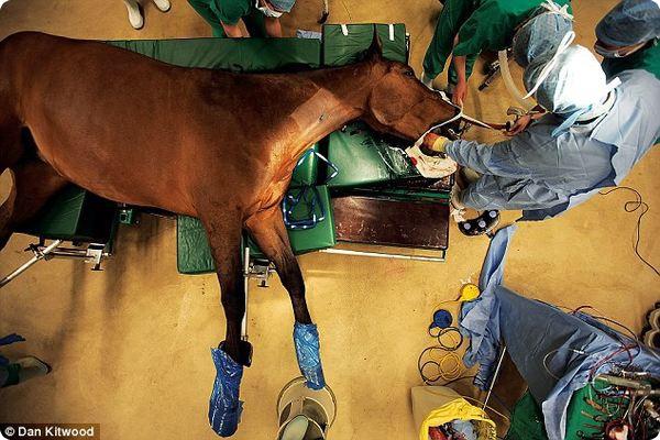 Лучшая клиника для лошадей
