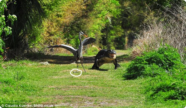 Отдай моего крокодильчика!!!