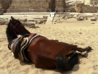 Забытые животные Ешипетской революции
