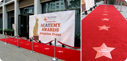 Церемония aCATemy Awards