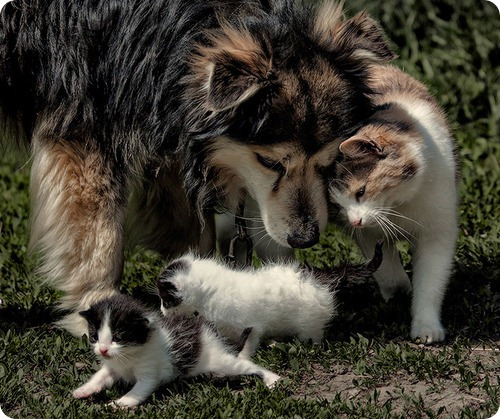 Как кошка с собакой – Подборка 16