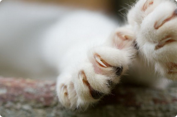 В Израиле запретили стричь когти кошкам