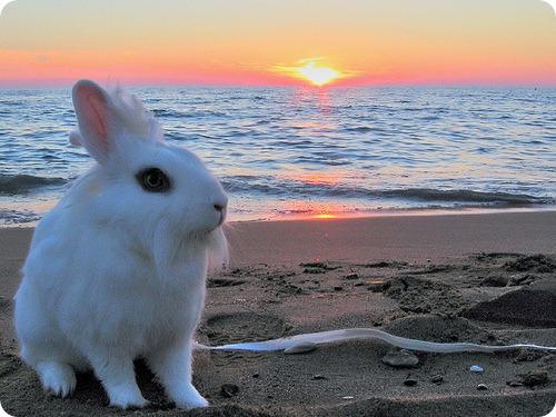 Факты о зайцах