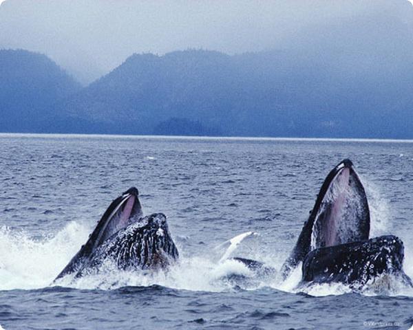Музыкальные хиты китов