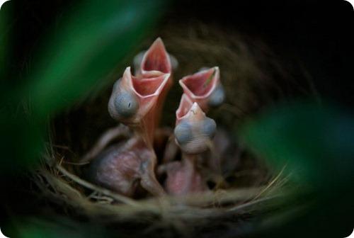 Птенцы домашние и не очень