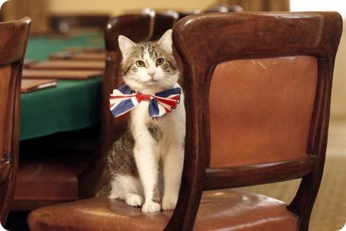 Свадебный костюм главного кота Англии Ларри