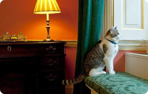 Кот по кличке Ларри...