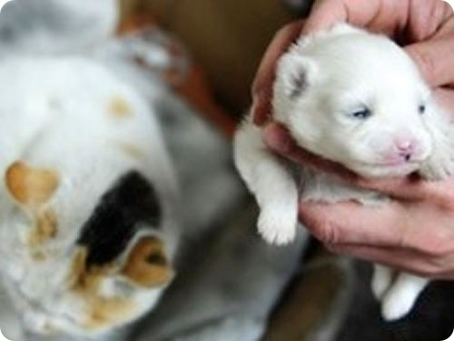 В Китае кошка родила щенка