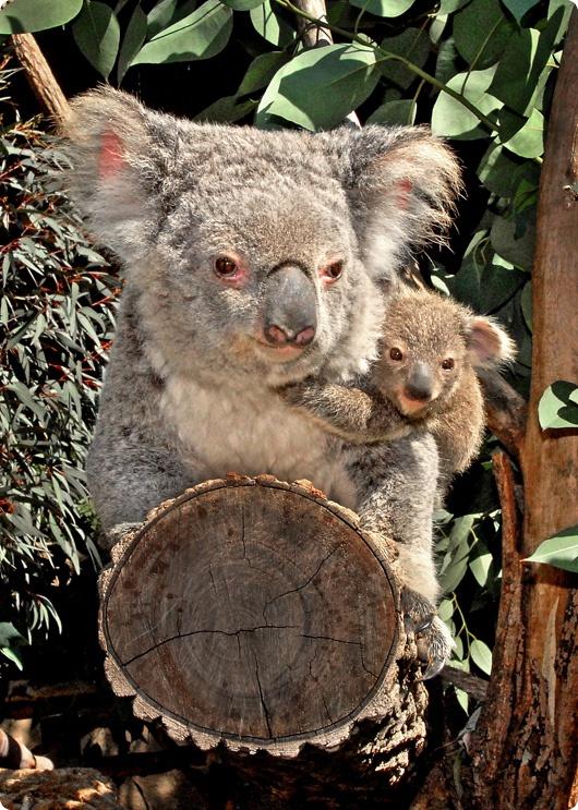Лос-анджелесский зоопарк наполнился малышами