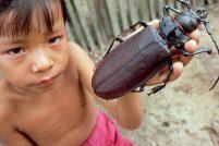 15 самых крупных насекомых в мире