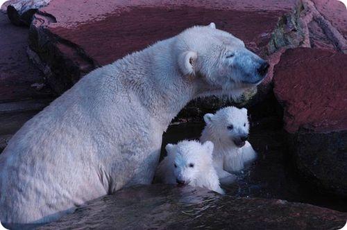 Дебют братьев-близнецов в зоопарке Нюрнберга