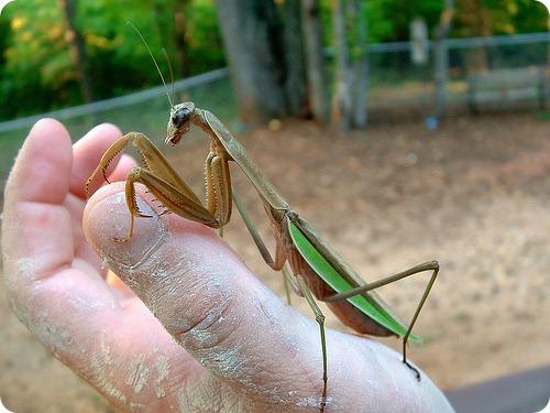 Самые крупные насекомые в мире