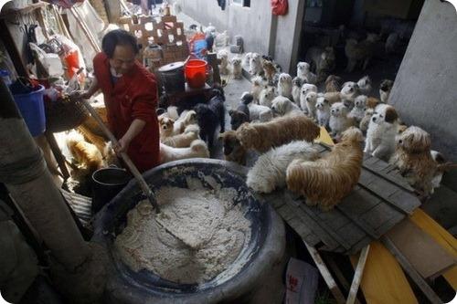 Китайский шеф-повар заботится о 140 бездомных собаках