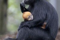 Пополнение в зоопарках Австралии