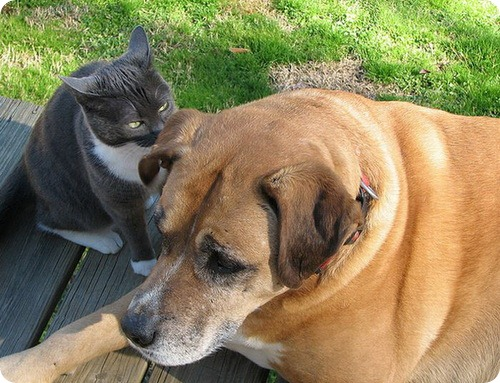 Как кошка с собакой – Подборка 17
