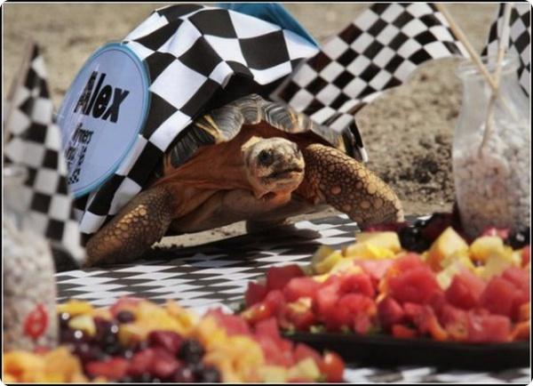 Черепашьи гонки состоялись в США