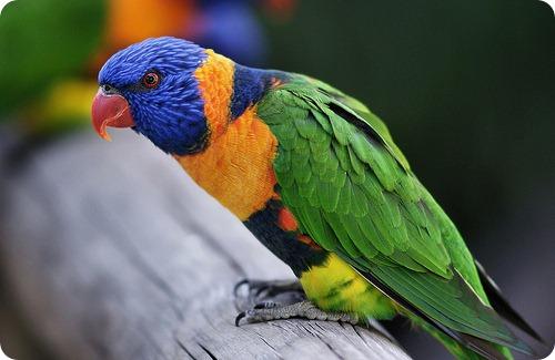 Птицы-алкоголики сотнями падают с неба