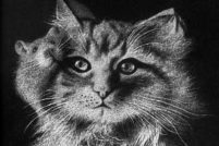 Ручные кошки: Рисование пухом