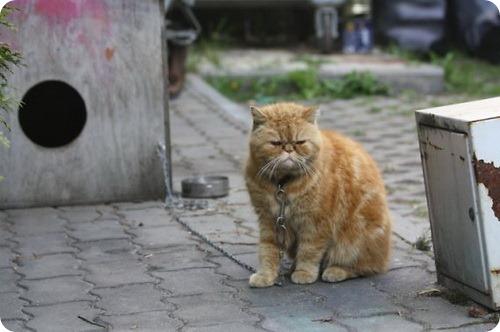 Слишком вспыльчивый кот