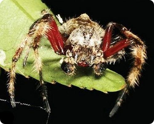 ТОП10 самых странных существ на Земле - 2011