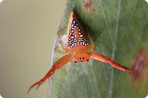 Треугольный паук
