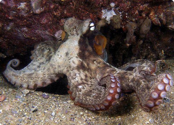 Координация движений осьминога и его зрение