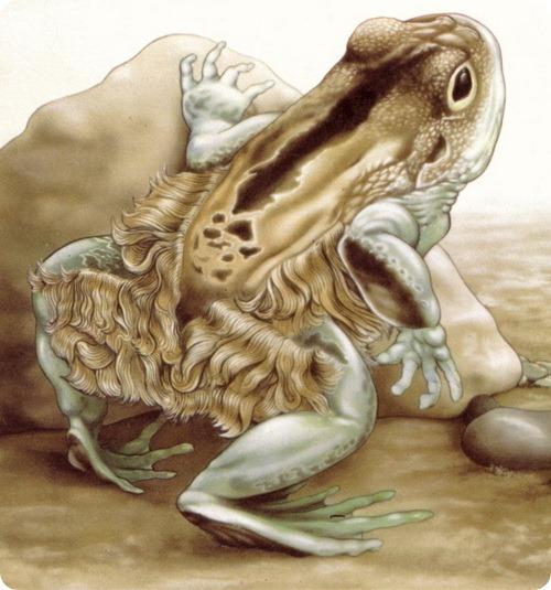 Волосатые лягушки