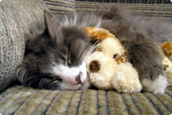 Видят ли сны животные