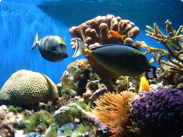 Путешествия обитателей коралловых рифов