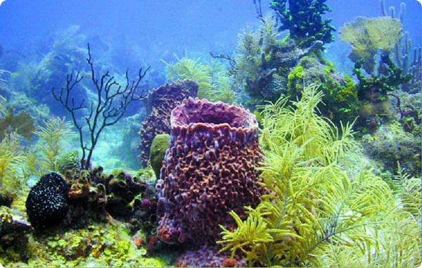 Кожа морских губок является их мышечной тканью