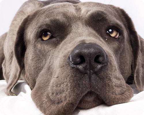 Собака за долги