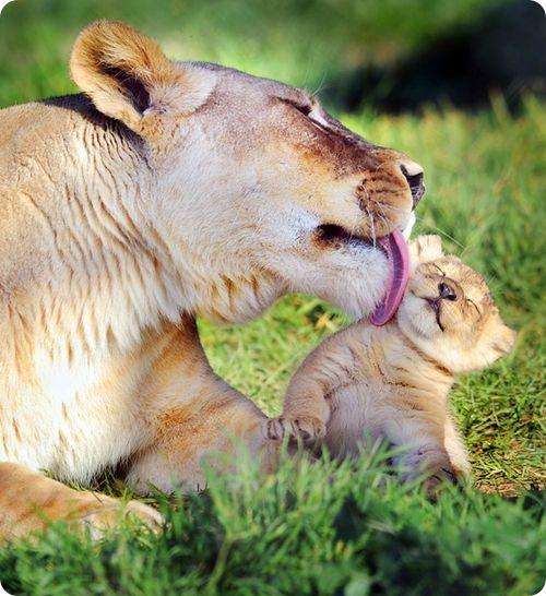 Как назвать львенка?