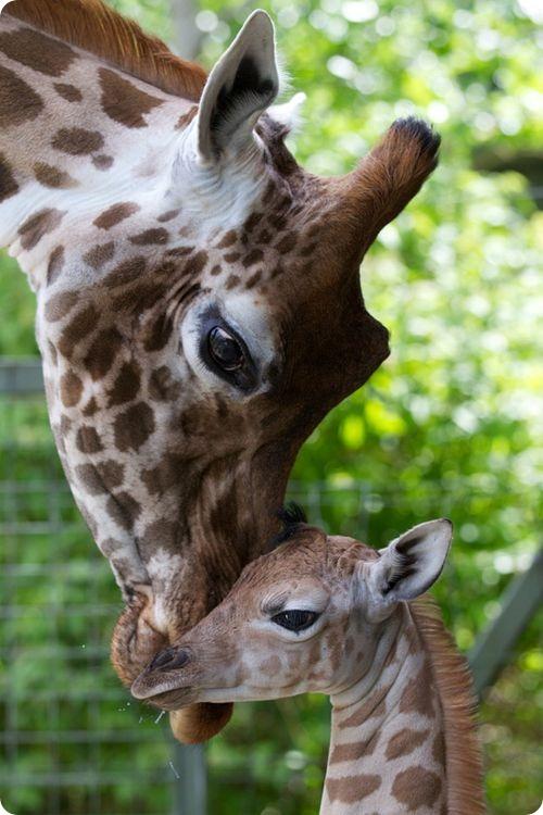 Пополнение в Дублинском зоопарке